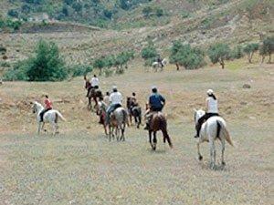 Paseos a caballo Ronda